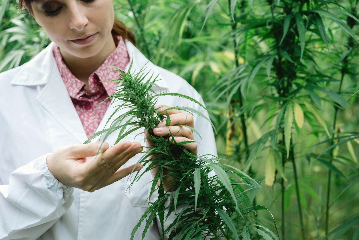 Cannabis Card Doctor Hollywood Easy Clinic