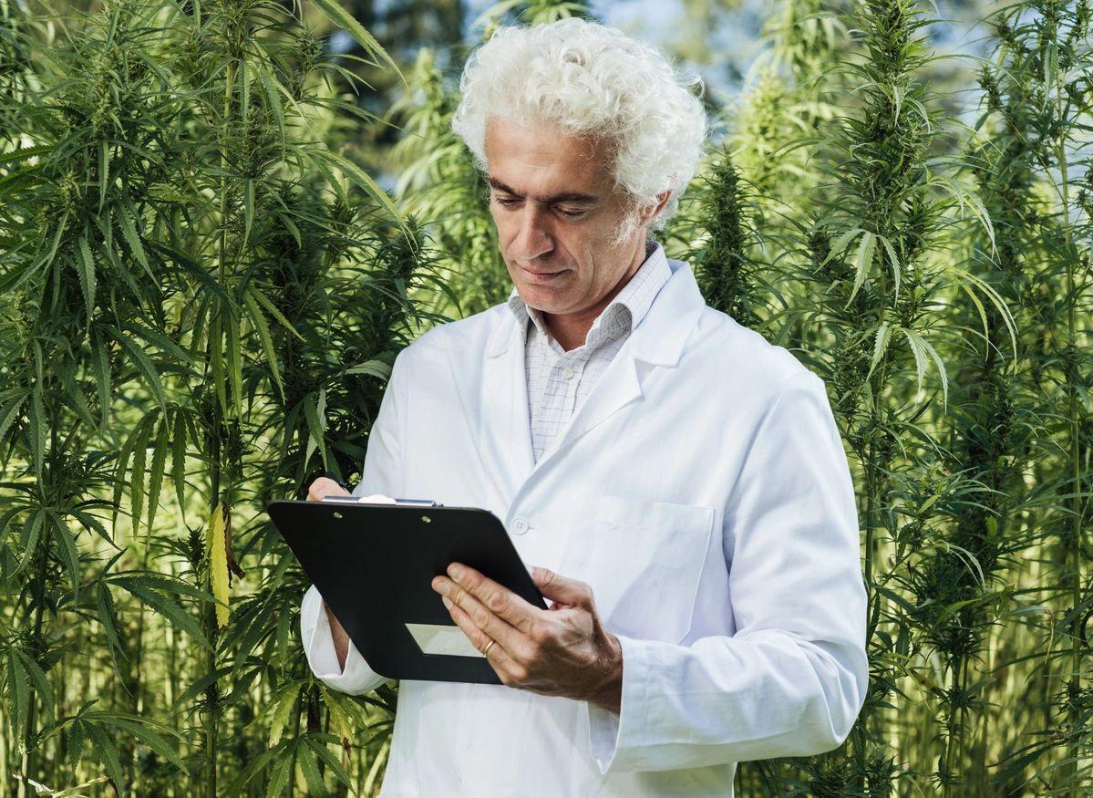 Medical Cannabis Card Reseda Studio City Easy Clinic