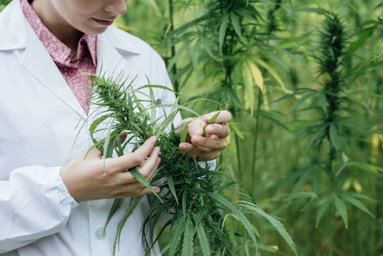Medical Marijuana Doctors Staten Island New York City