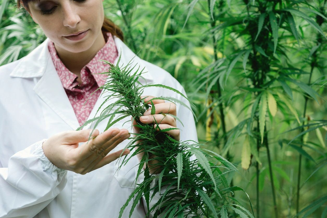 Medical Marijuana Card Doctors Tampa Florida