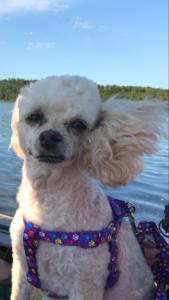 Blondie On Boat