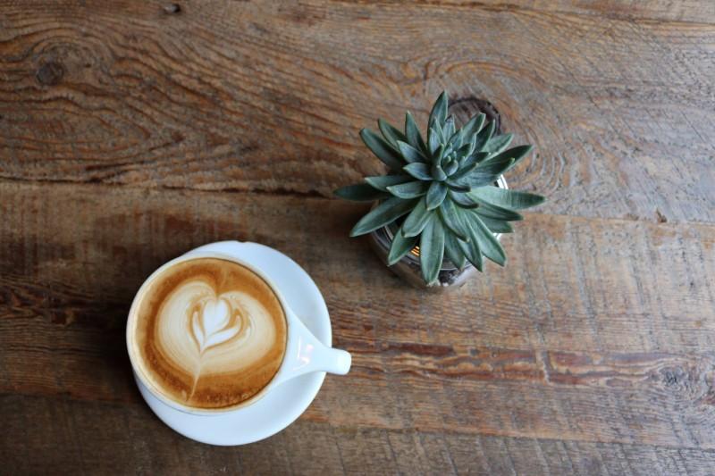 Coffee, Cactus, Stock Photo