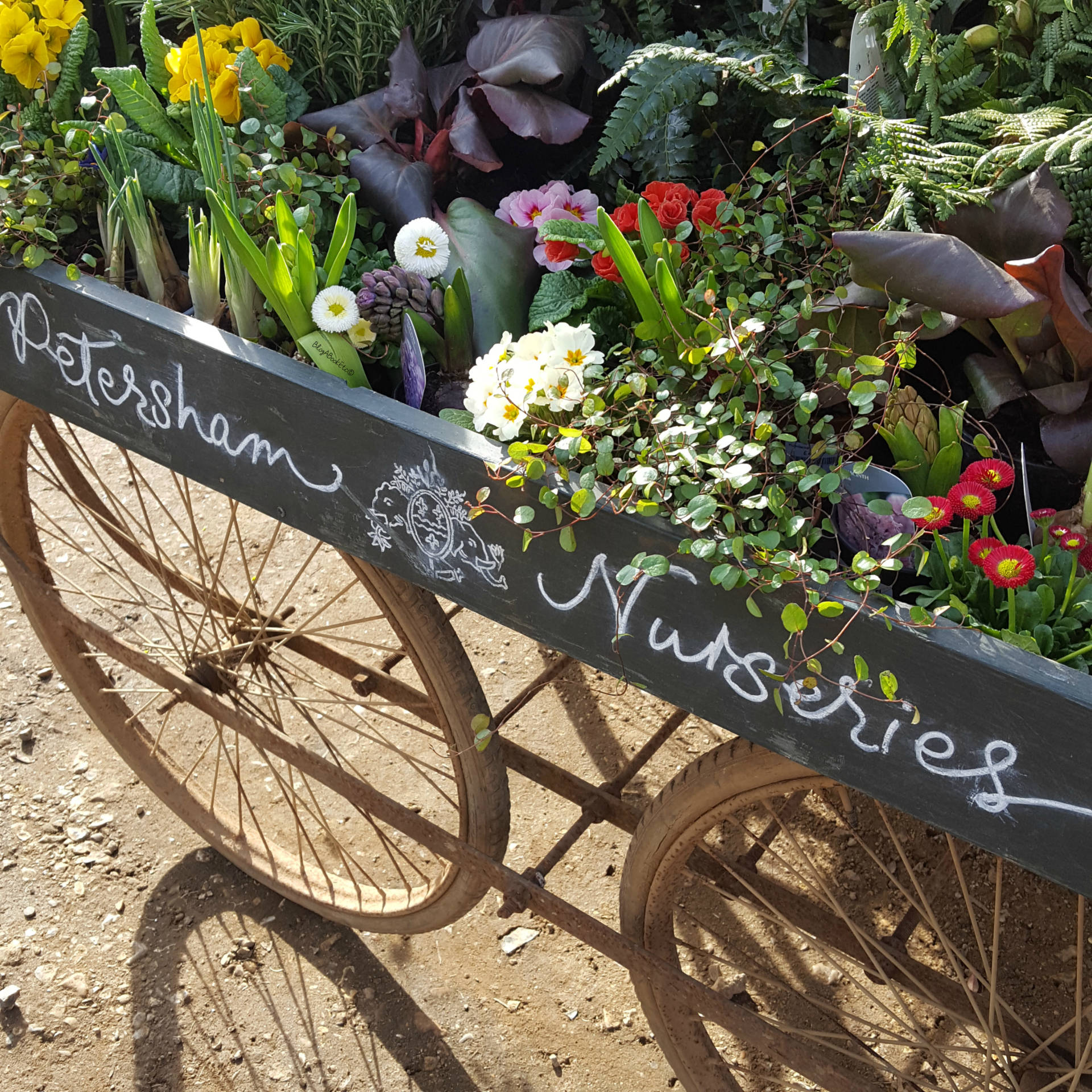 Petersham Nurseries, Petersham, Richmond, London, Surrey, Flowers, Plants, Succulents, Cacti, Cactus, Bedding Plants, Nurseries, Garden, Gardening, Summer, Beautiful, Beauty, Blogger, Life, Lifestyle, Blog A Book Etc, Fay