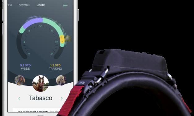Wearable Technology Improves Health, Training Of Horses