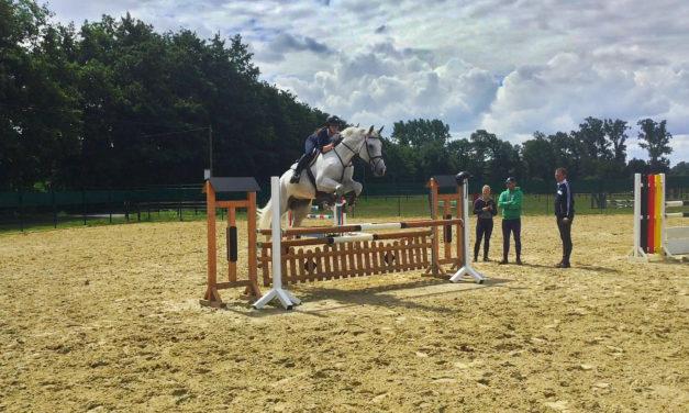 The Use Of Dominance Jeopardizes Horse Training
