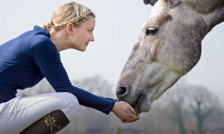 New Horse Welfare & Safety Penalty Guidelines