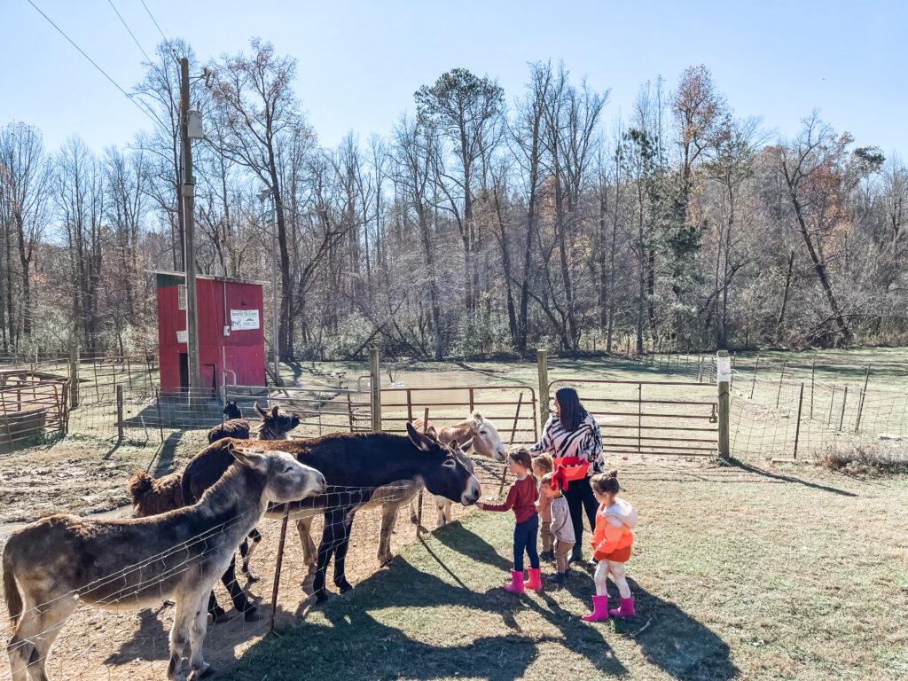 build an ark blue ridge, hikes for kids, kid friendly activities in blue ridge Georgia, things to do with kids in blue ridge Georgia