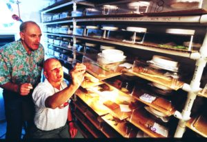 R. T. Staten and A. C. Cohen checking for problems in USDA, APHIS colony of big-eyed bugs in mass-rearing facility for predators