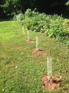 American Hazelnuts - Primal Woods