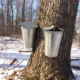 maple sap buckets