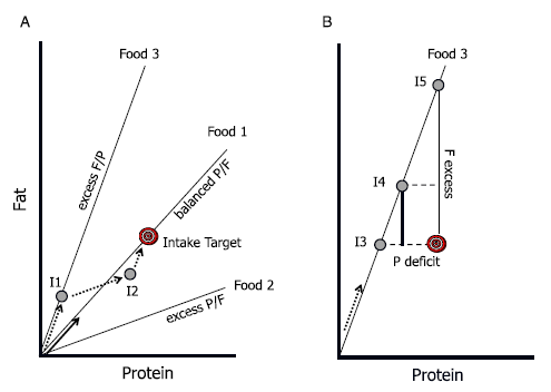 Core Concepts of the Geometric Framework for Nutrition