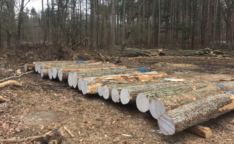 mill lumber from logs - log preparation