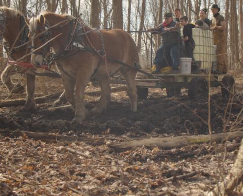draft horse sap wagon