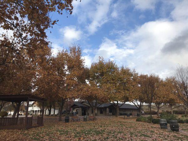 Dreamy fall leaves