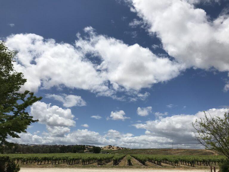 Estate Sauvignon Blanc