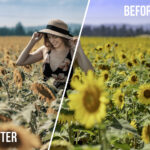 Sunflower Fields LUT