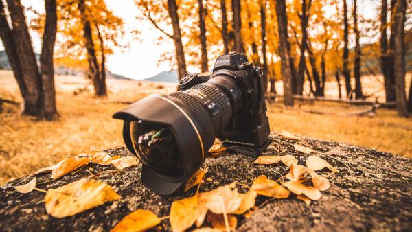 lightroom fall preset aspens in autumn by runngun photography nikon z6