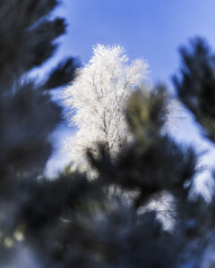 10 Winter Photography Tips and Tricks RunNGun Photo Example 6
