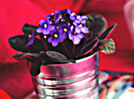 7 household plants that clean the air of harmful toxins-african-violets