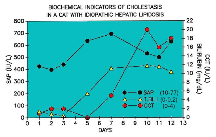 Hepatic lipidosis GGT ALP changes
