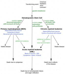 Leukemia pathogenesis