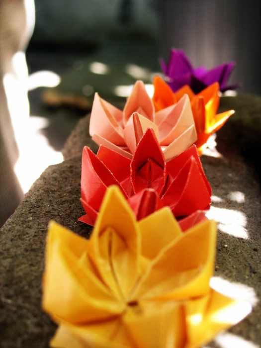 Origami_lotus_flowers_by_outinthegarden