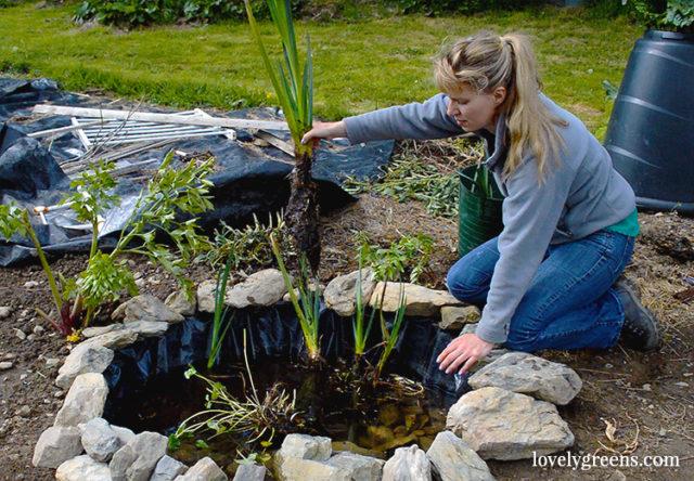 Building a Wildlife Pond in the Vegetable Garden