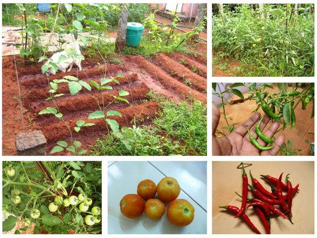 Growing a Small Kitchen Garden in Your Backyard