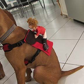 Halloween Puppy Costume Horse and Jockey