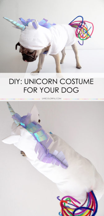 How to Make a Unicorn Costume for Your Dog