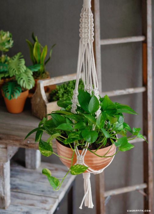 easy-macrame-plant-holder