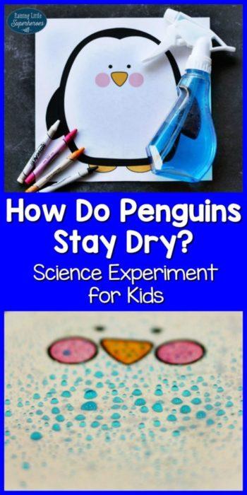 how-do-penguins-stay-dry