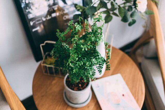 Houseplant on table