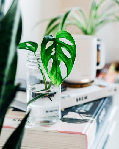 plant propagating in small glass jar