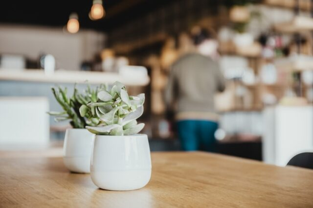 Succulent houseplant son a table in white pot
