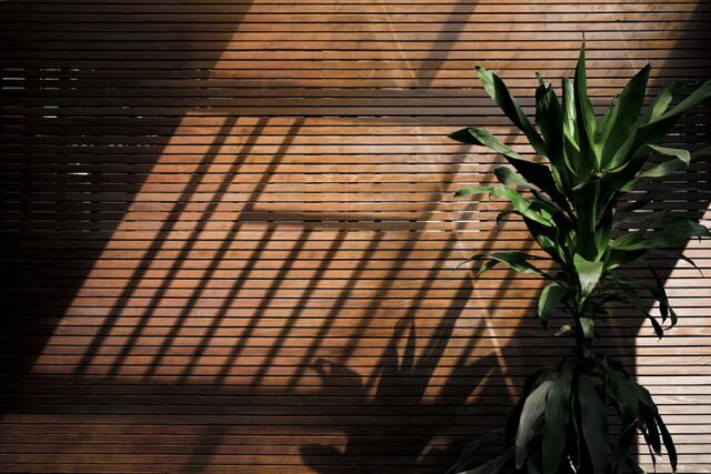 large plant in front of wooden blinds