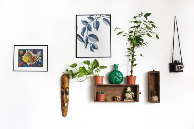 Plants camera and art on wall