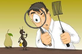 شركة مكافحة حشرات بالخرمة