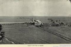 T-1899_Arecibo_SugarPlantation_Censo
