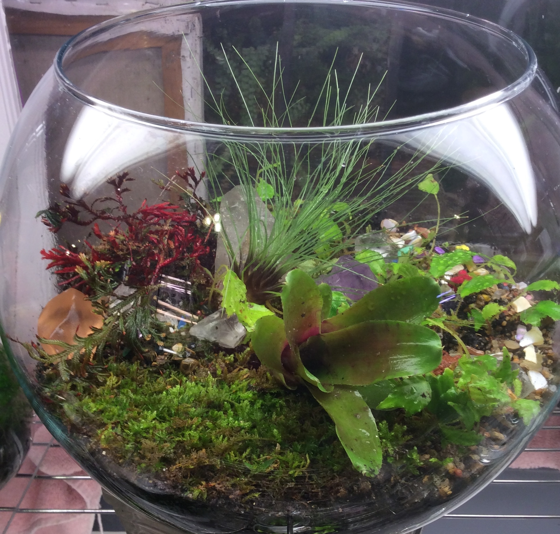 Build Your Own Terrarium March 10 and 11, 2018