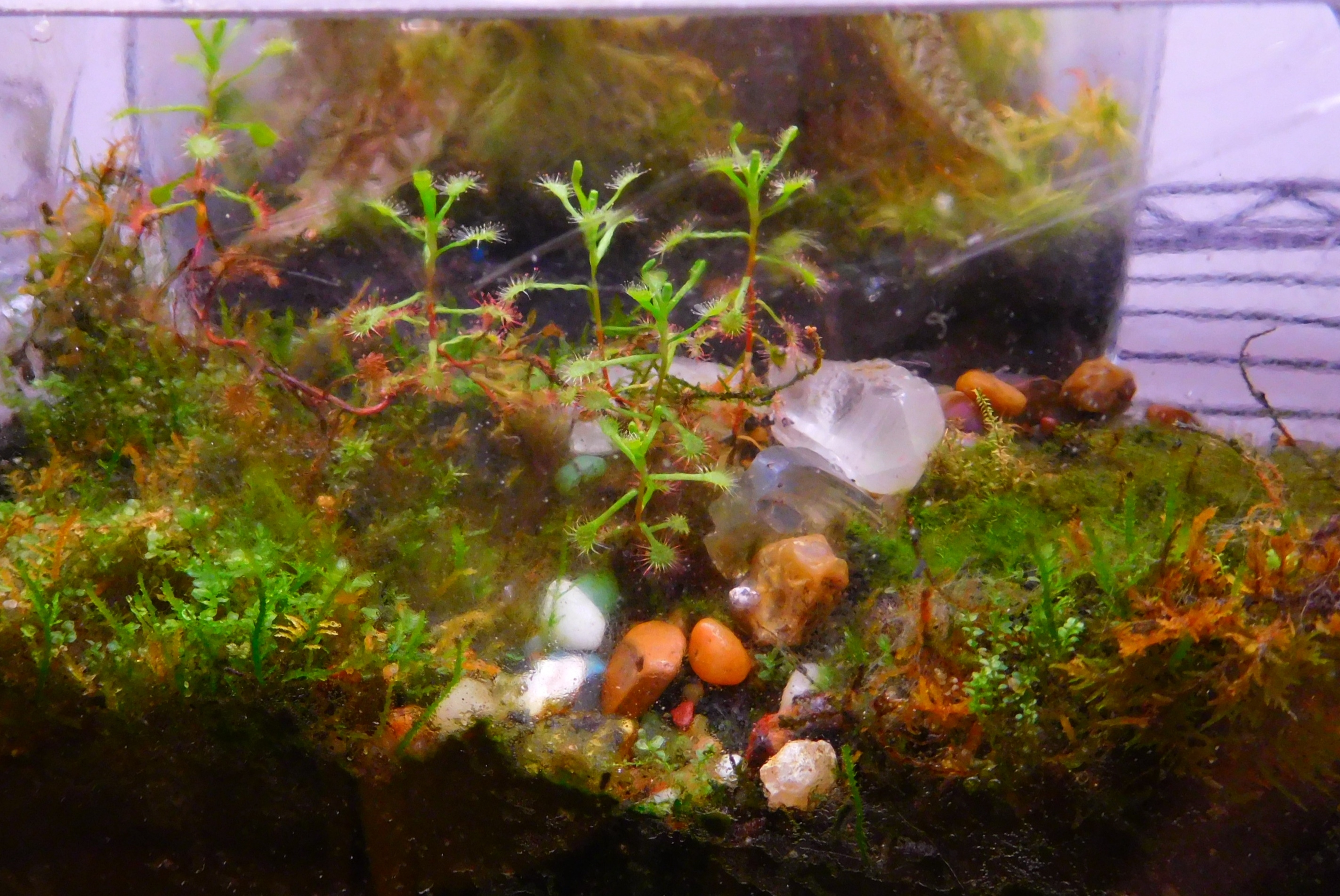 Last Week at Eclectic Eye – Terrariums for your Valentine!