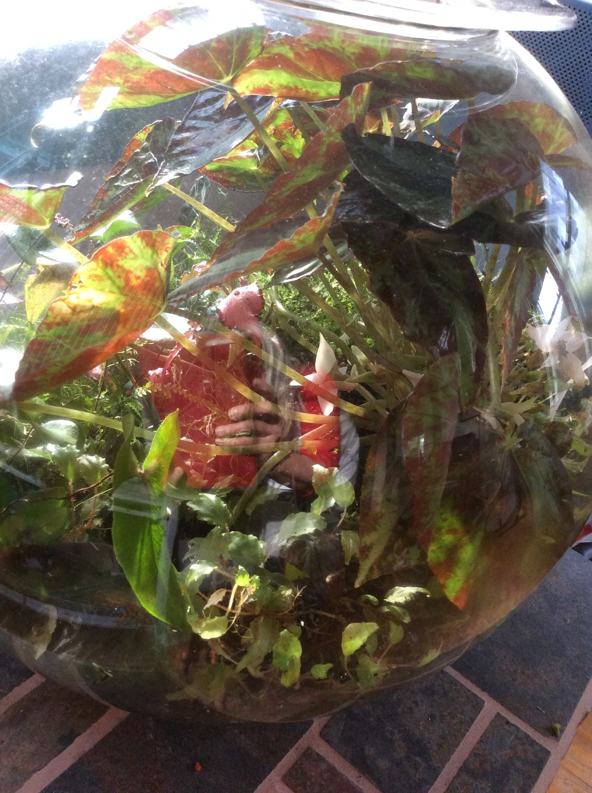 Moms Love Terrariums!  Take a Look and Give Me a Call