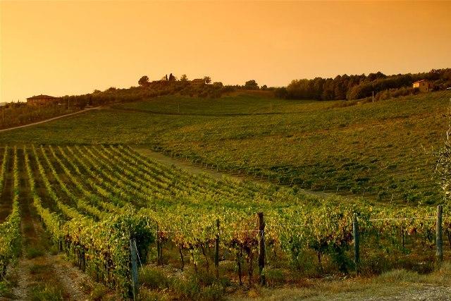 wijnveld Chianti streek