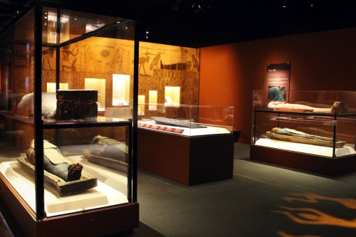 Mummies of the World Egypt
