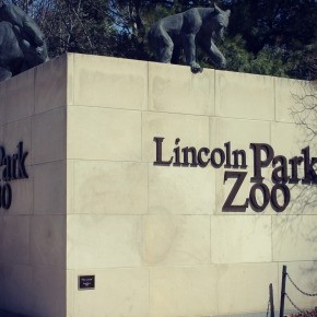 Chicago :: Lincoln Park Zoo