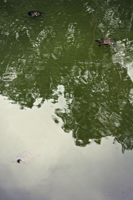 Cincinnati Nature Center Turtles