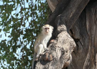 Best place for safari in Botswana Header Destinations