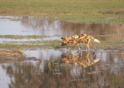 Best place for safari Xakanaxa