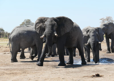 Botswana Safari Packages Header Elephants