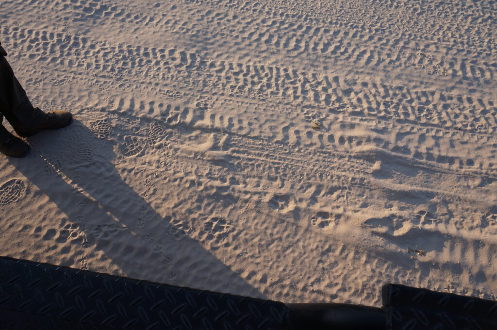 Safari in Botswana tracks